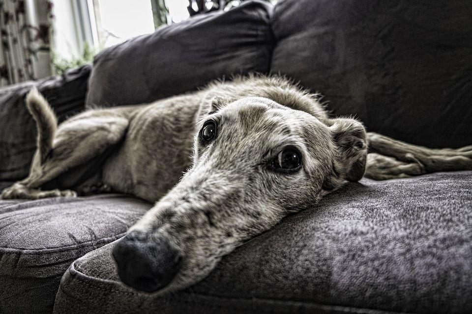 Campaña animales geriátricos: Servicios y Campañas de Clínica Veterinaria Benicalap