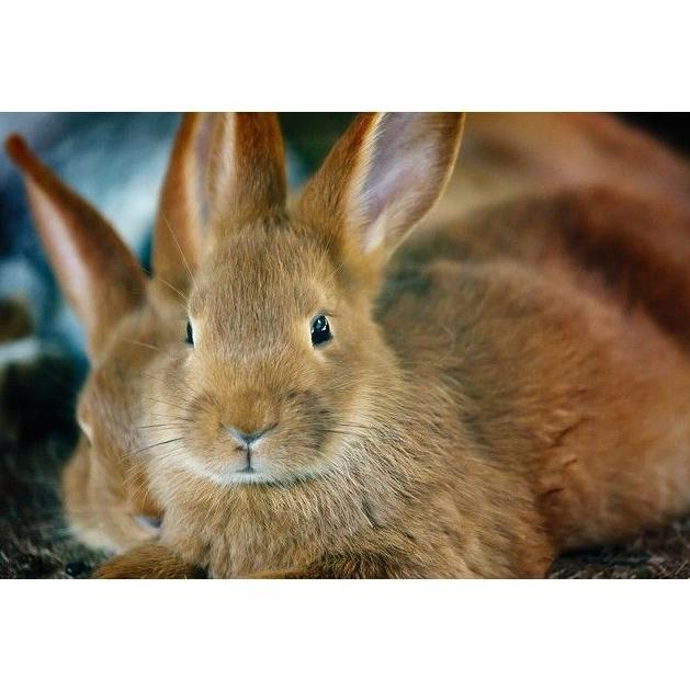 Especialidades conejos: Servicios y Campañas de Clínica Veterinaria Benicalap