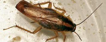 Eliminación de plagas de cucarachas