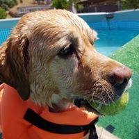 Adiestramiento canino en Tres Cantos