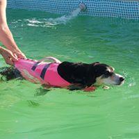 Hidroterapia para perros en Tres Cantos