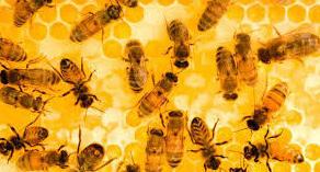 Un mundo sin abejas