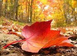Consejos y tratamientos para el cuidado de la piel en otoño-invierno