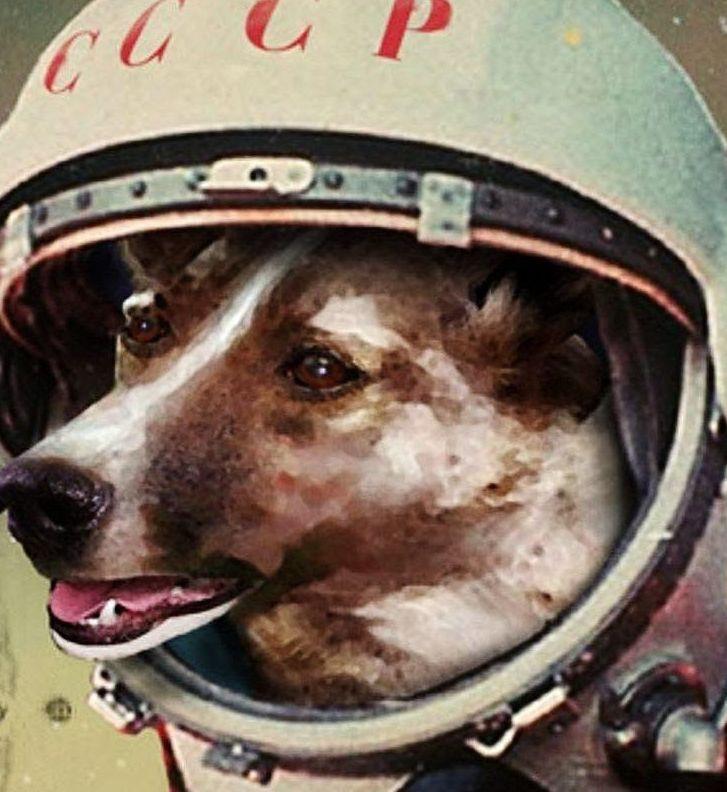 Laika la primera perra cosmonauta