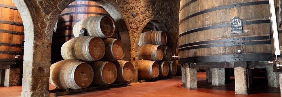 Los mejores vinos de La Alpujarra en Granada. Bodega Los Jumillanos