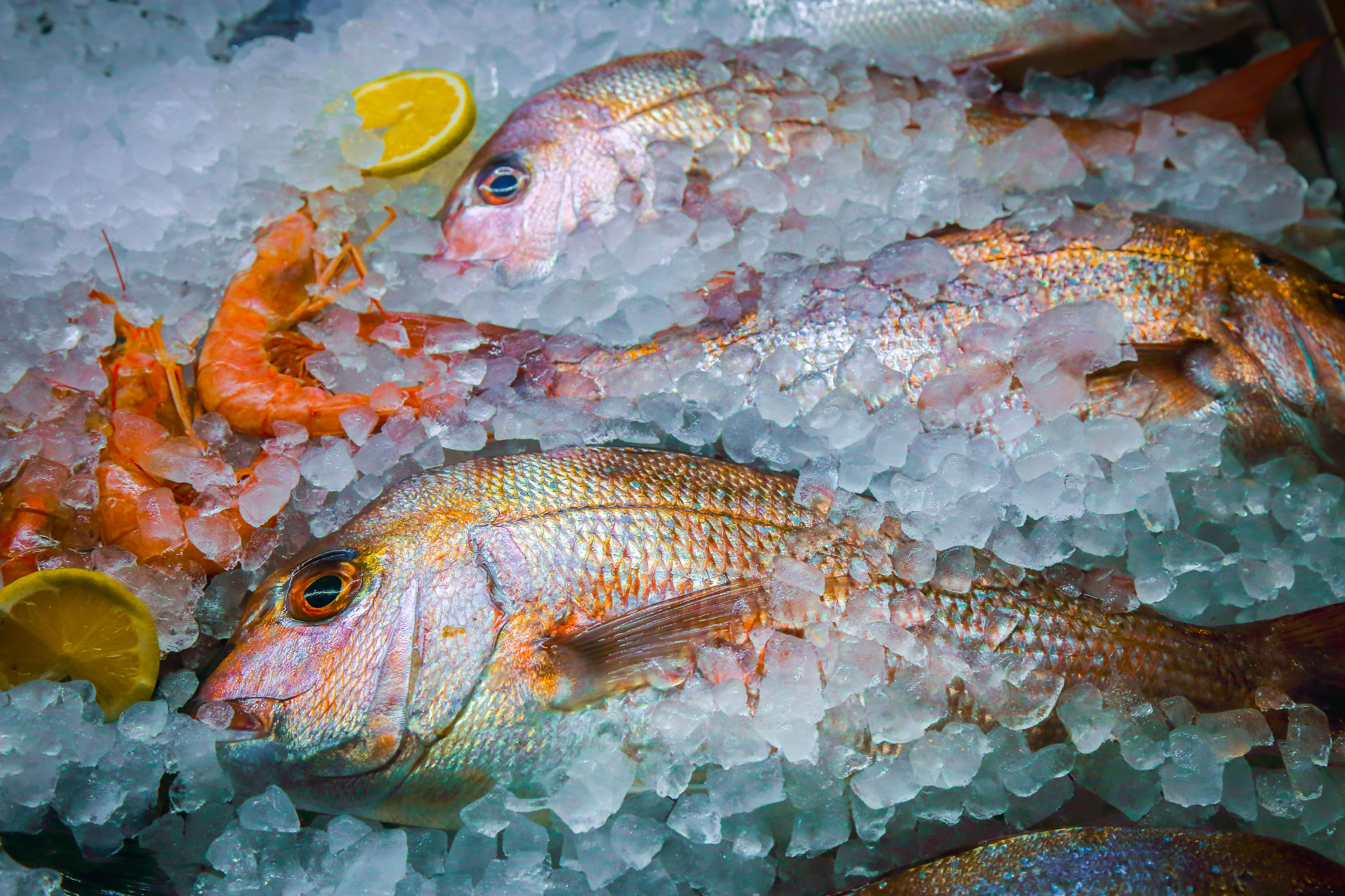 Pescados de varios tipos