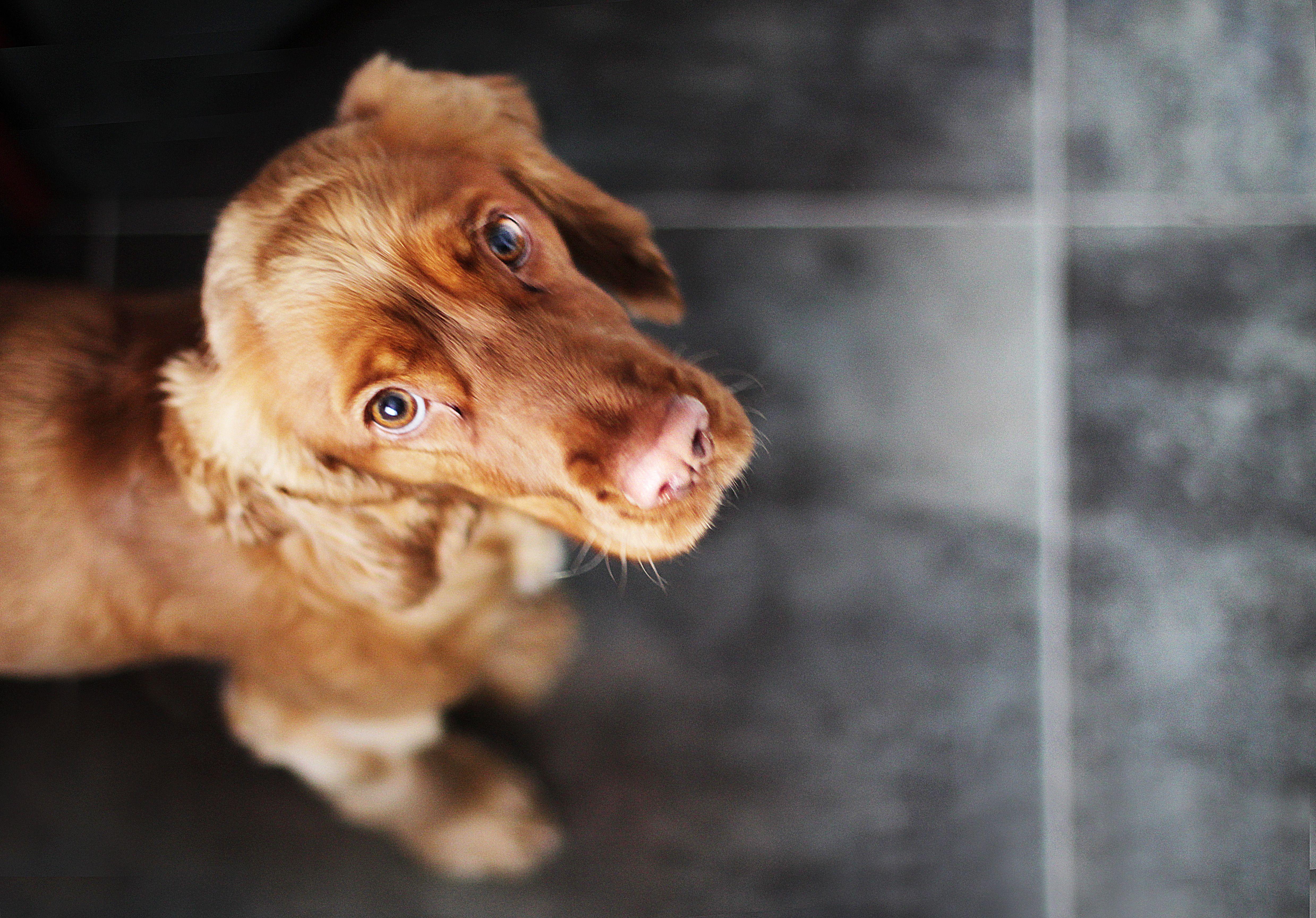 Residencia canina: Servicios de Clínica Veterinaria Dr. Alonso Martínez