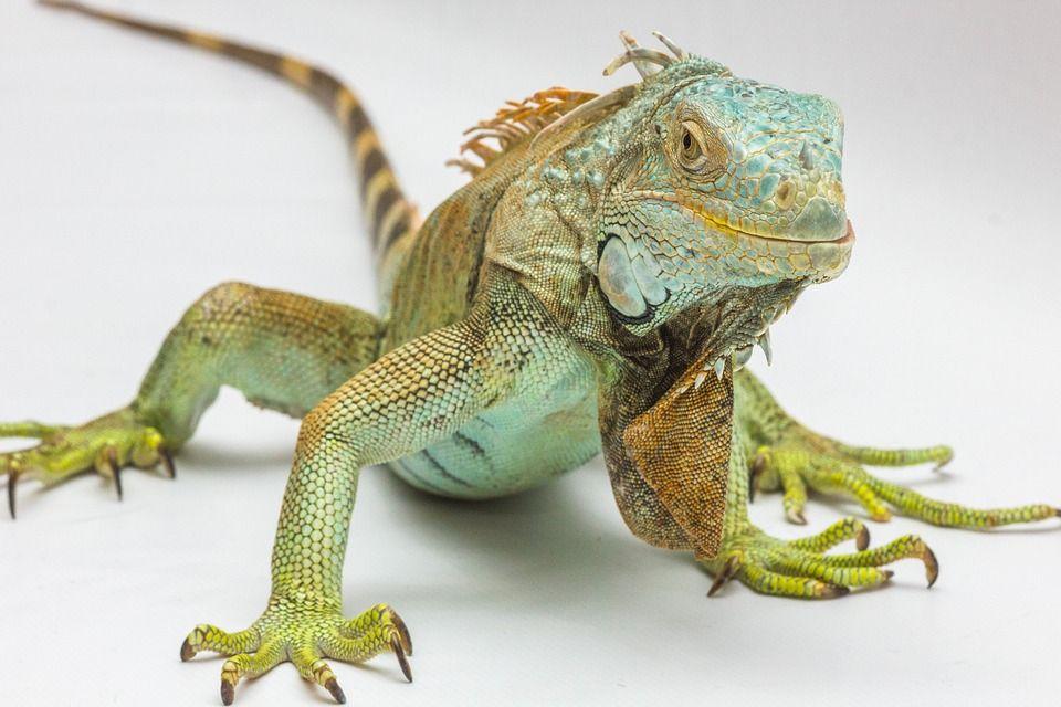 Animales exóticos: Servicios de Clínica Veterinaria Dr. Alonso Martínez