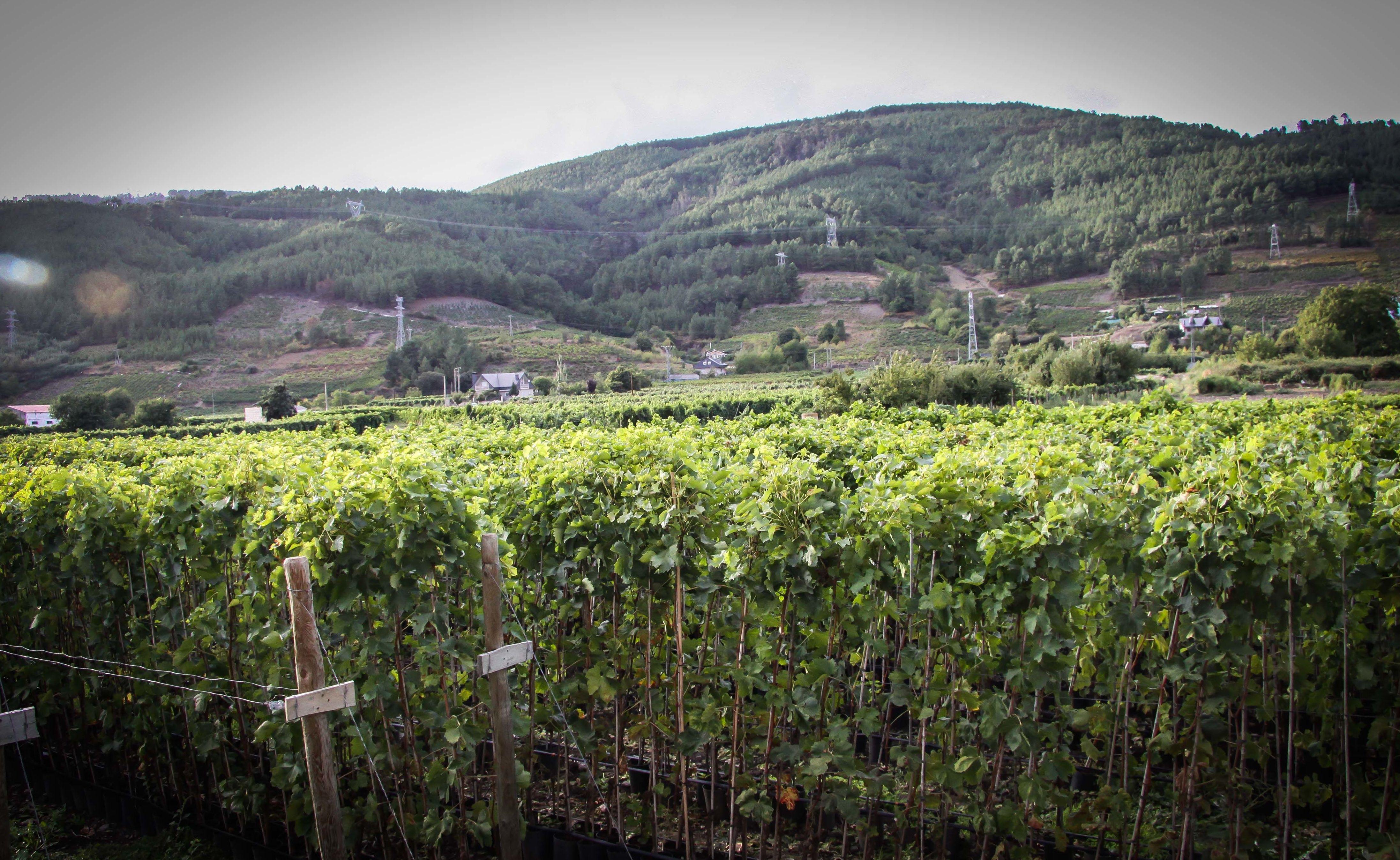 Foto 24 de Viveros agrícolas y forestales en Vilamartín de Valdeorras | Viveros Vedo