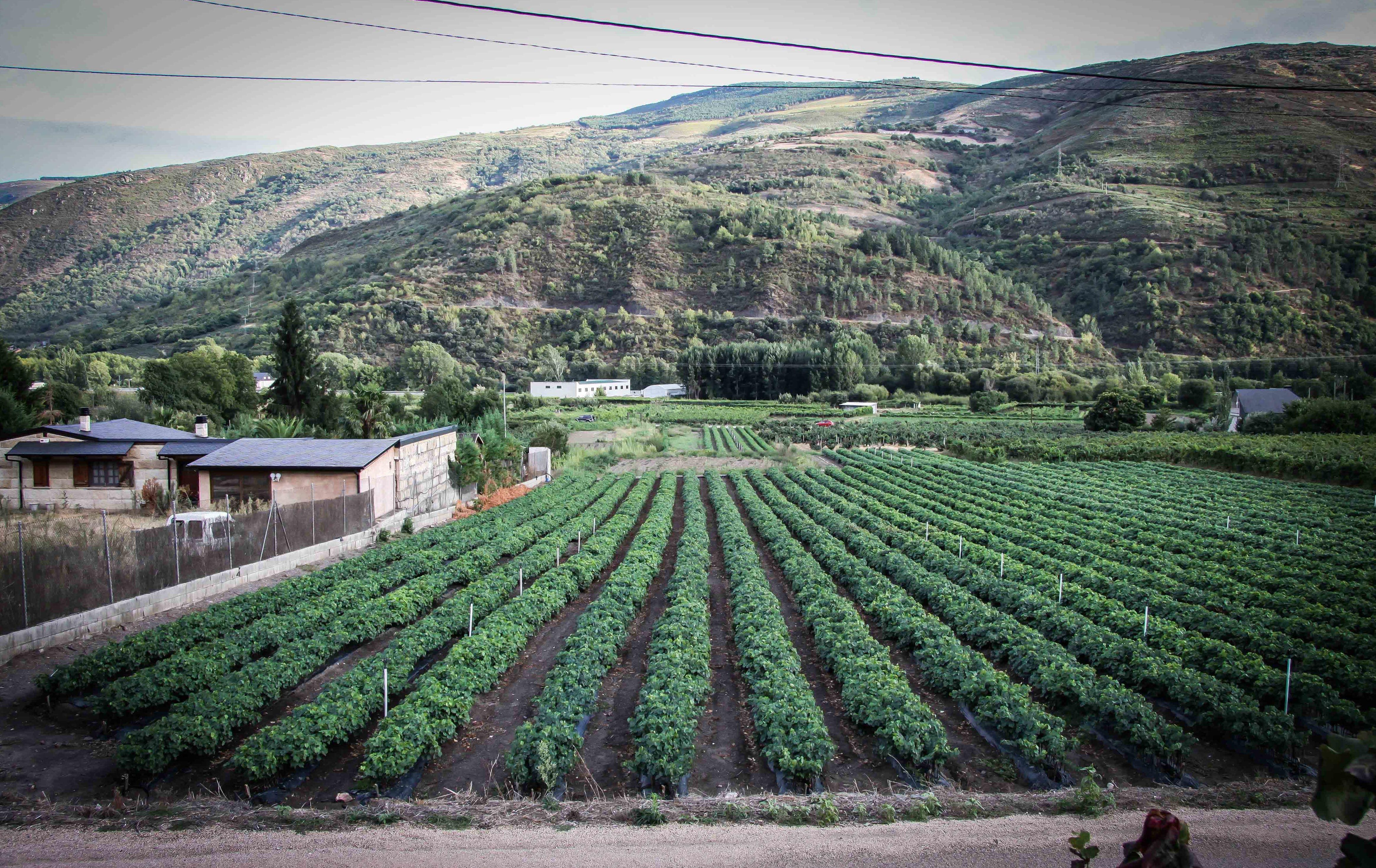 Foto 54 de Viveros agrícolas y forestales en Vilamartín de Valdeorras | Viveros Vedo