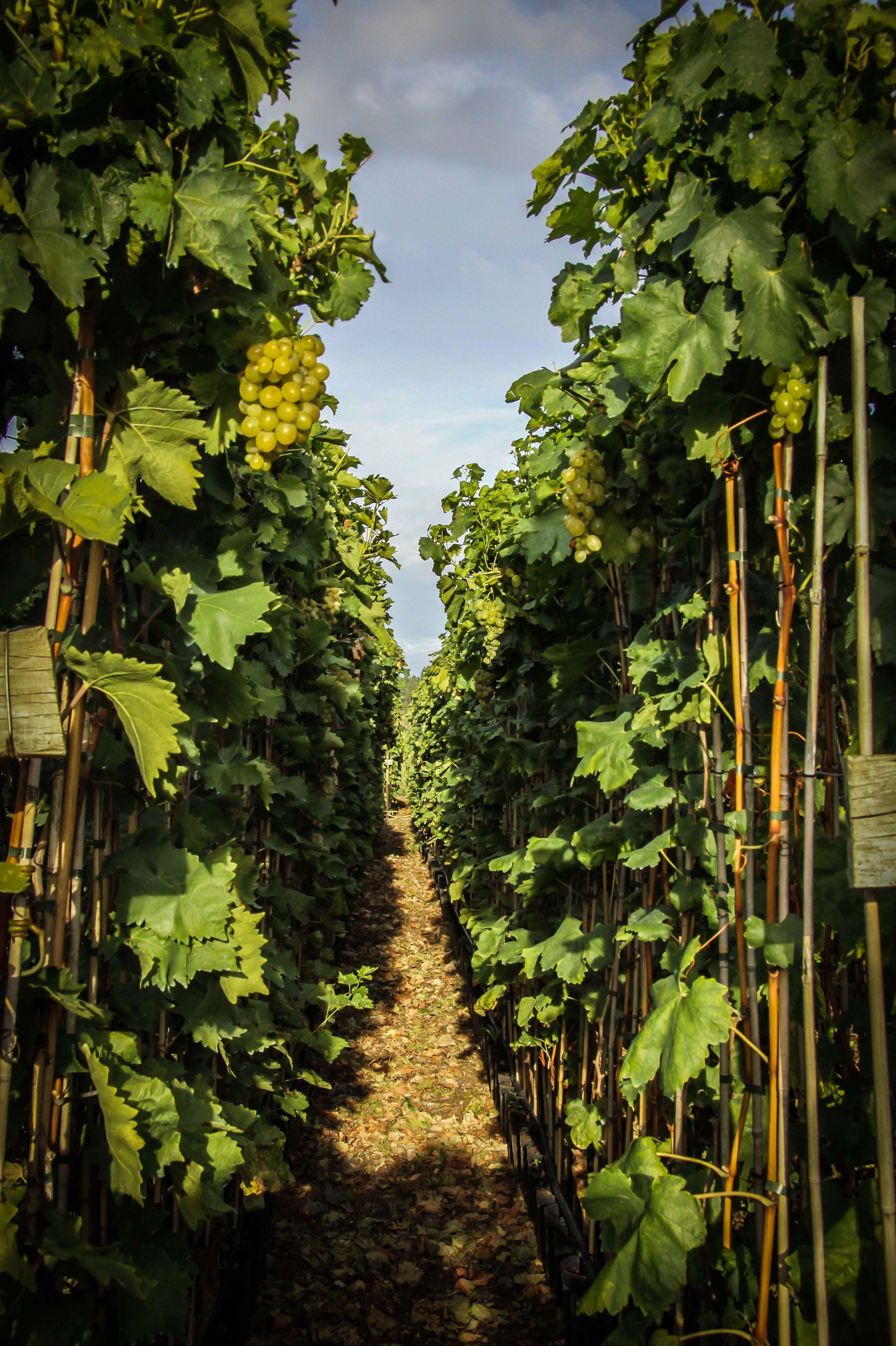 Foto 14 de Viveros agrícolas y forestales en Vilamartín de Valdeorras | Viveros Vedo