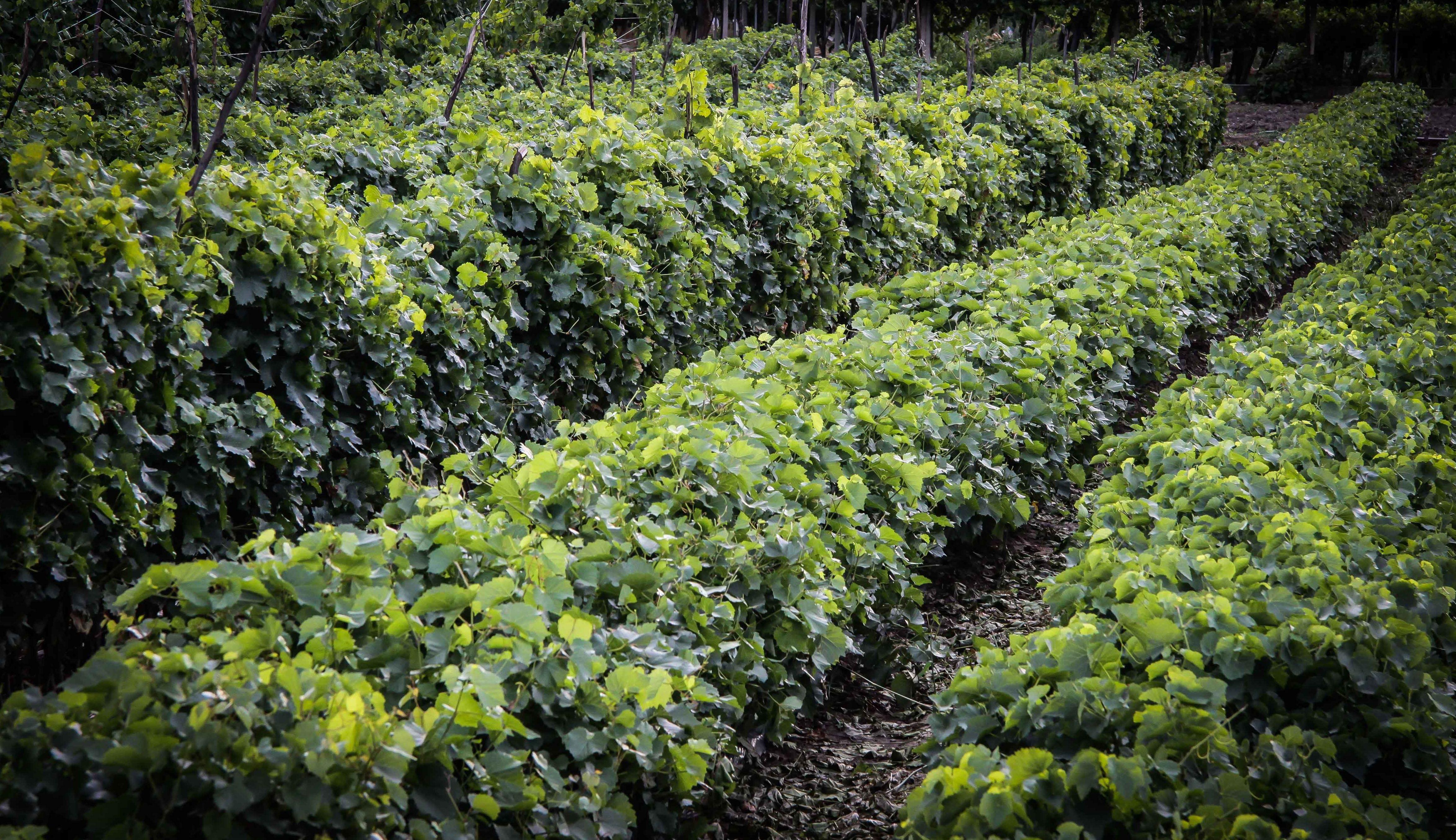 Foto 42 de Viveros agrícolas y forestales en Vilamartín de Valdeorras | Viveros Vedo