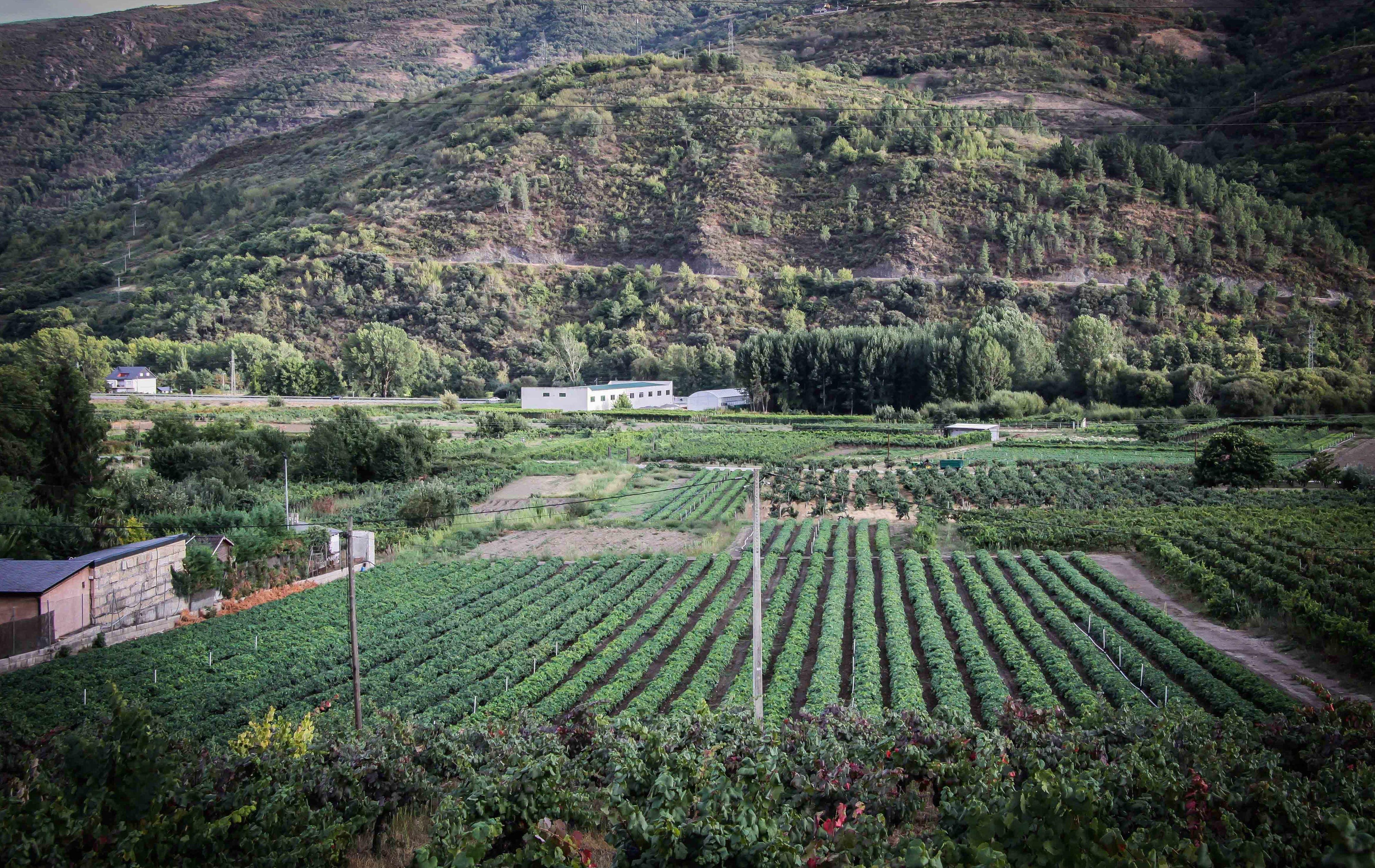 Foto 55 de Viveros agrícolas y forestales en Vilamartín de Valdeorras | Viveros Vedo
