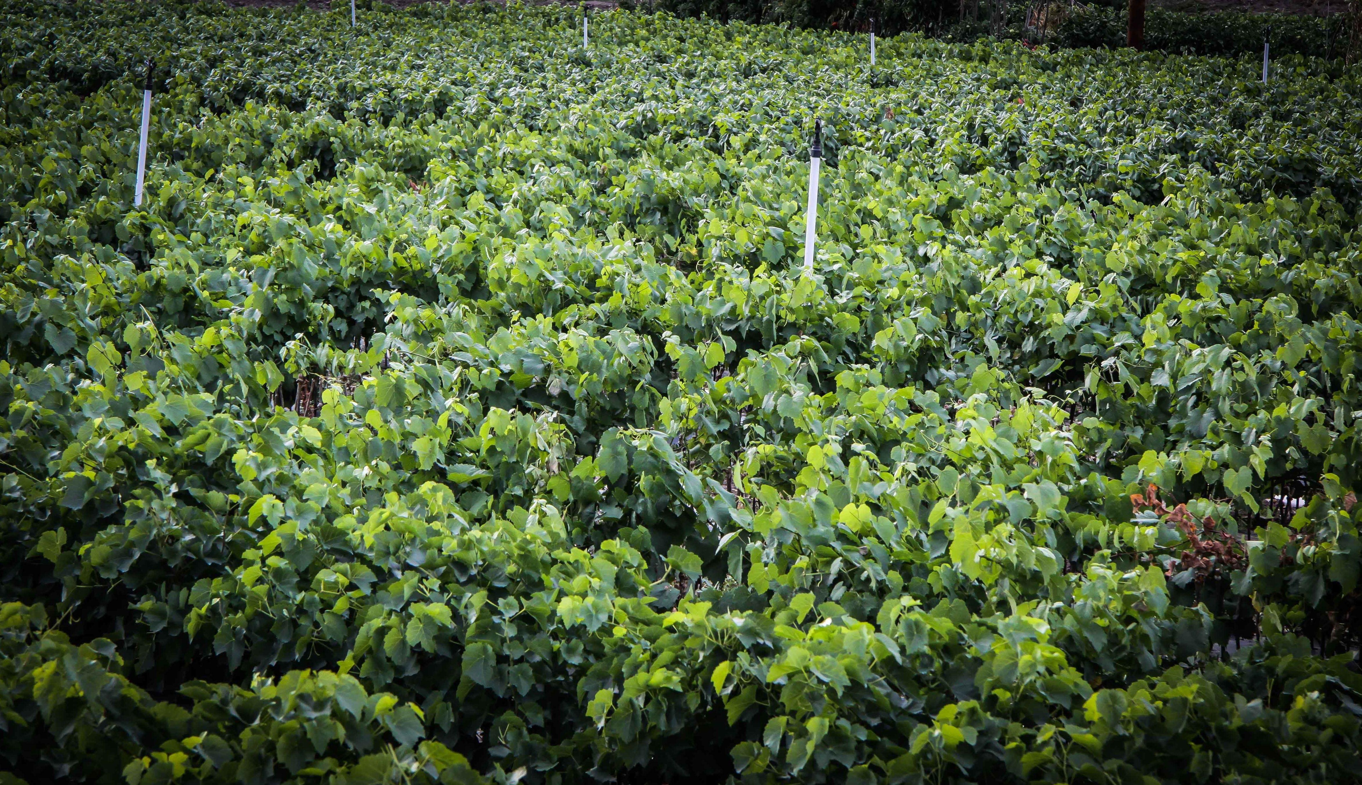 Foto 39 de Viveros agrícolas y forestales en Vilamartín de Valdeorras | Viveros Vedo