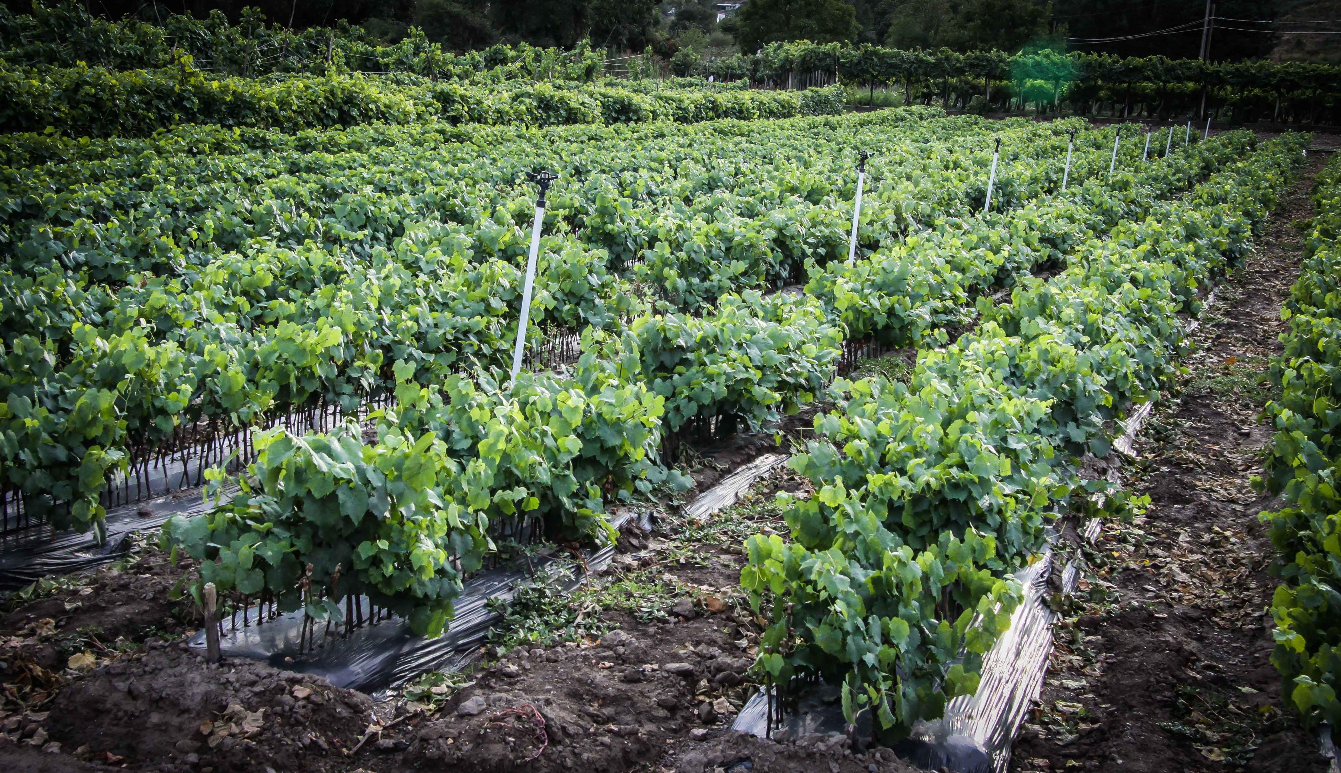 Foto 45 de Viveros agrícolas y forestales en Vilamartín de Valdeorras | Viveros Vedo
