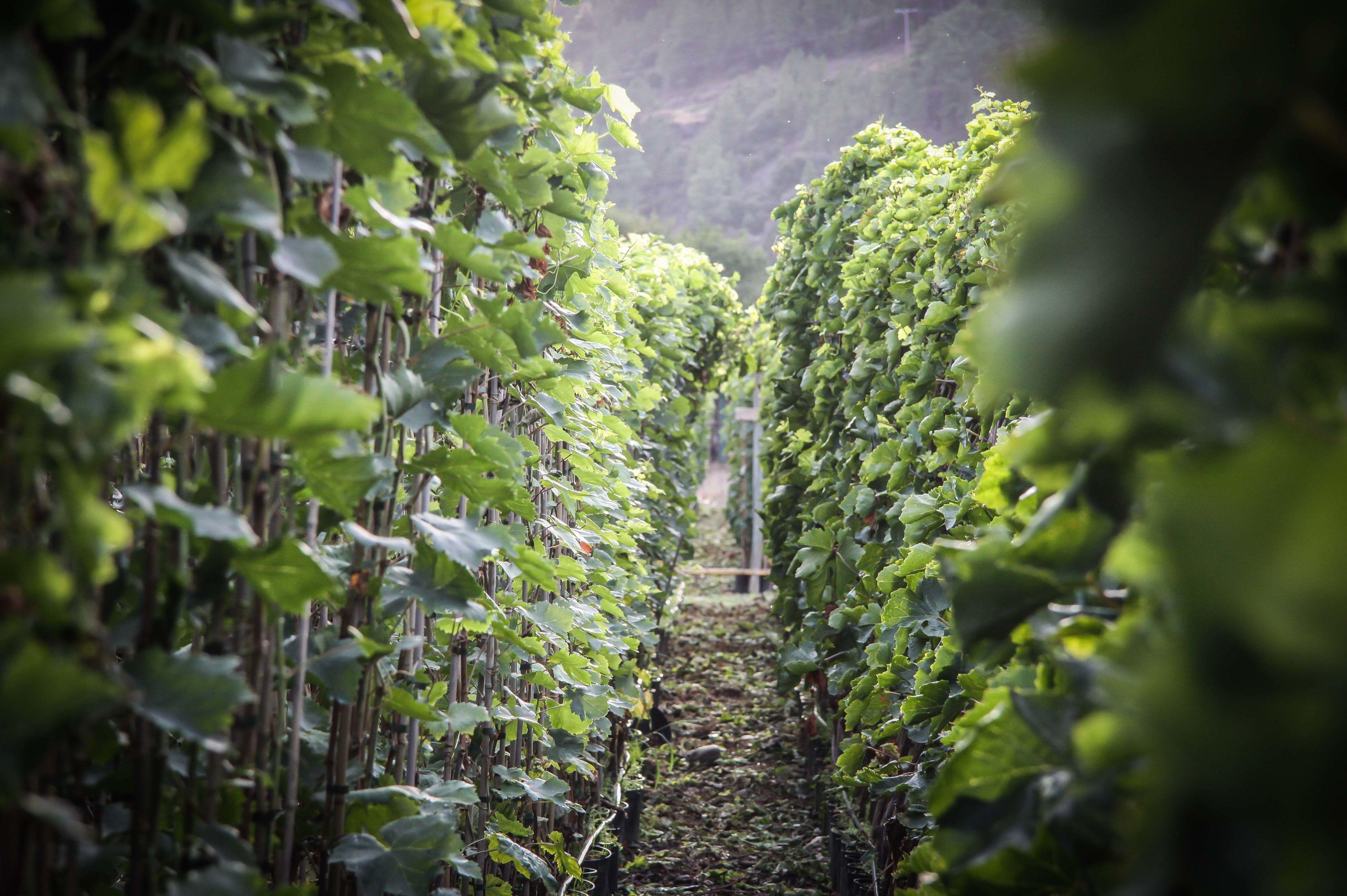 Foto 21 de Viveros agrícolas y forestales en Vilamartín de Valdeorras | Viveros Vedo