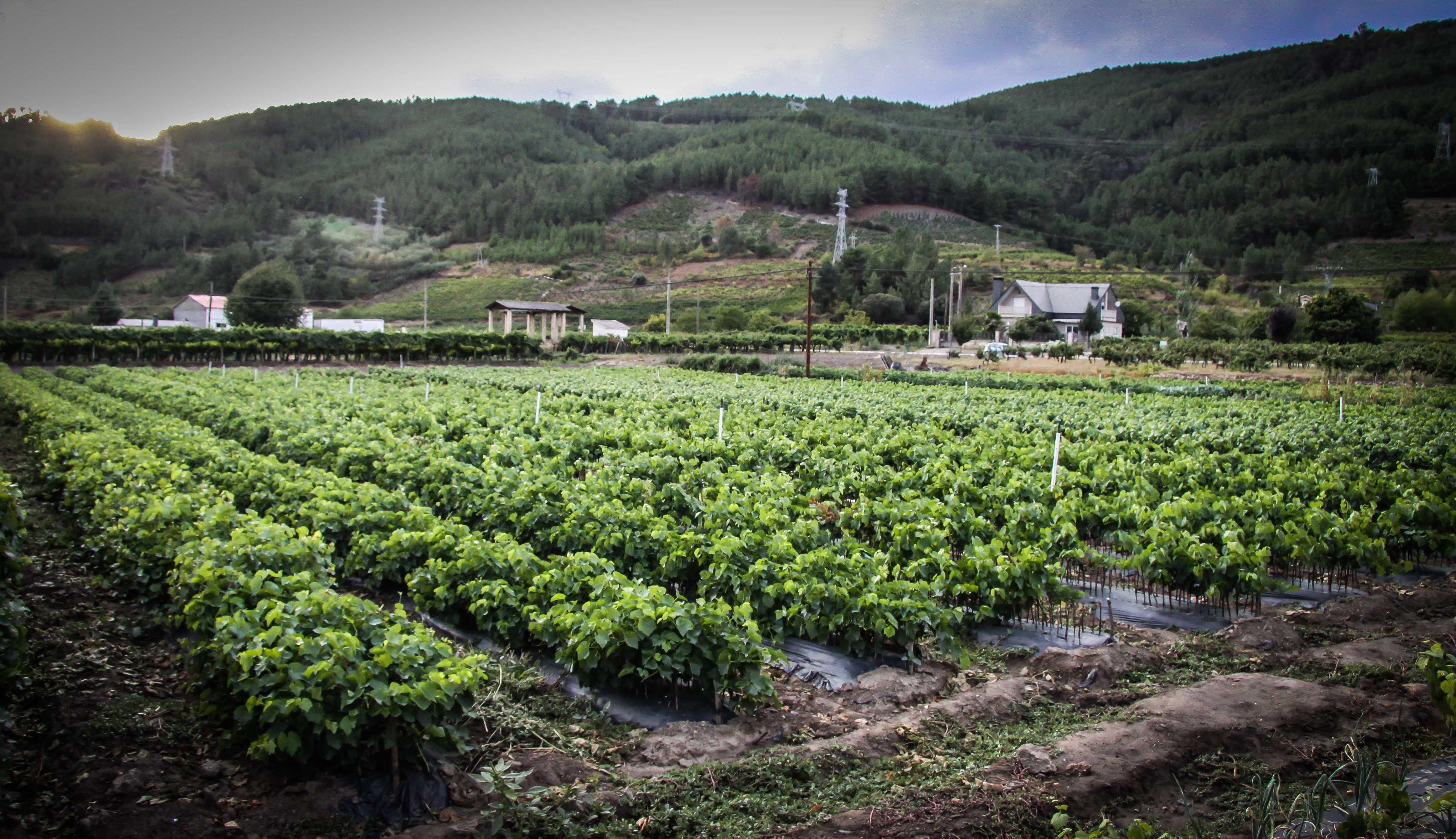 Foto 40 de Viveros agrícolas y forestales en Vilamartín de Valdeorras | Viveros Vedo
