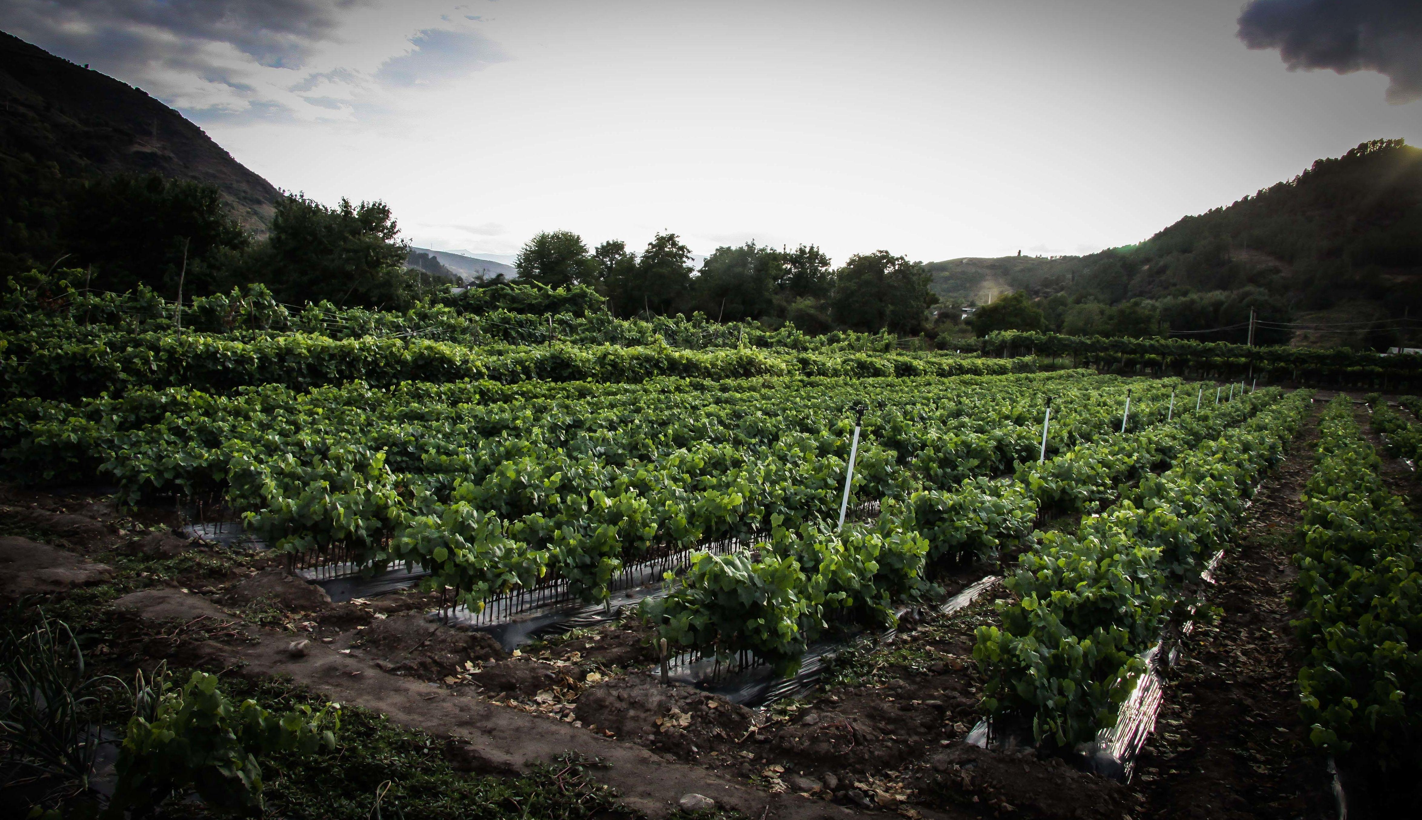 Foto 44 de Viveros agrícolas y forestales en Vilamartín de Valdeorras | Viveros Vedo