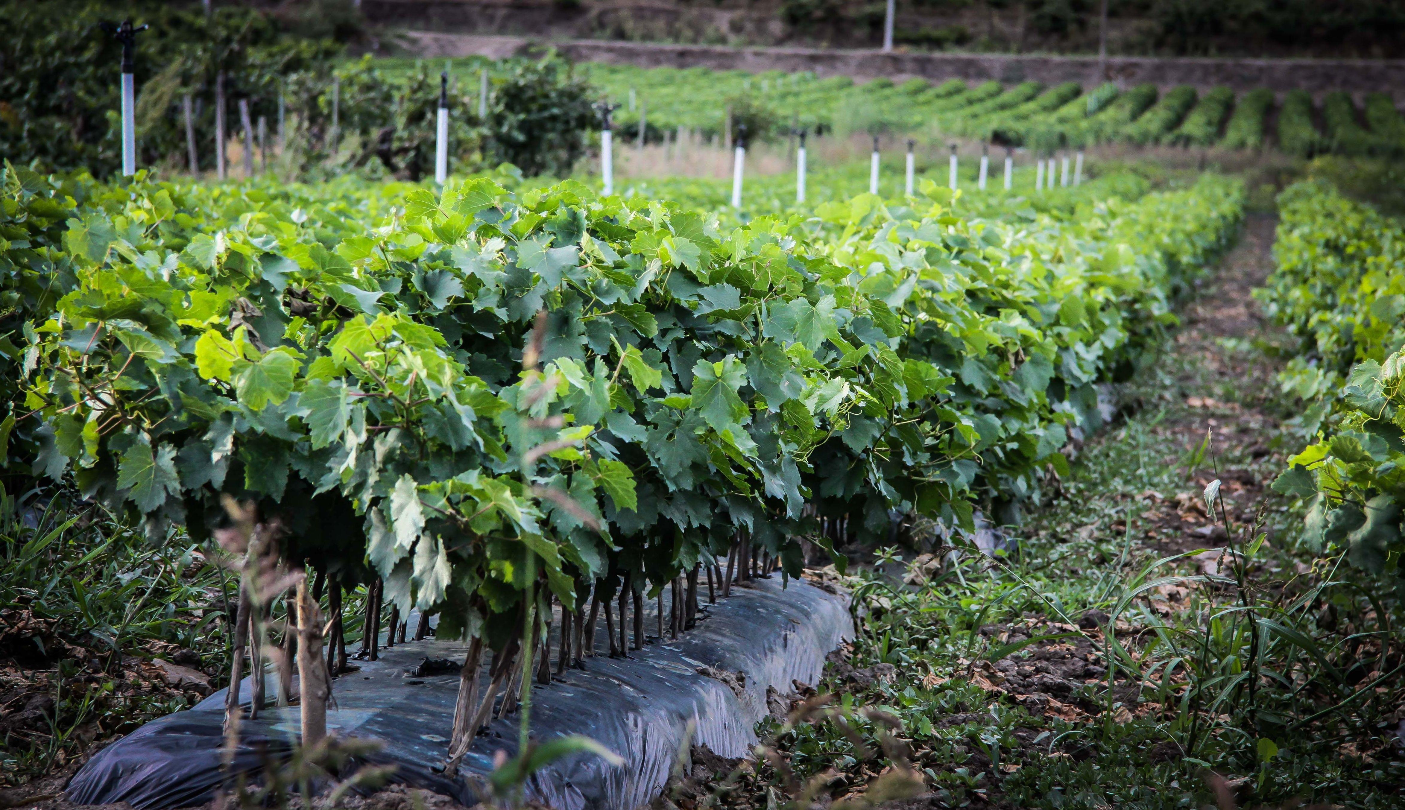Foto 47 de Viveros agrícolas y forestales en Vilamartín de Valdeorras | Viveros Vedo