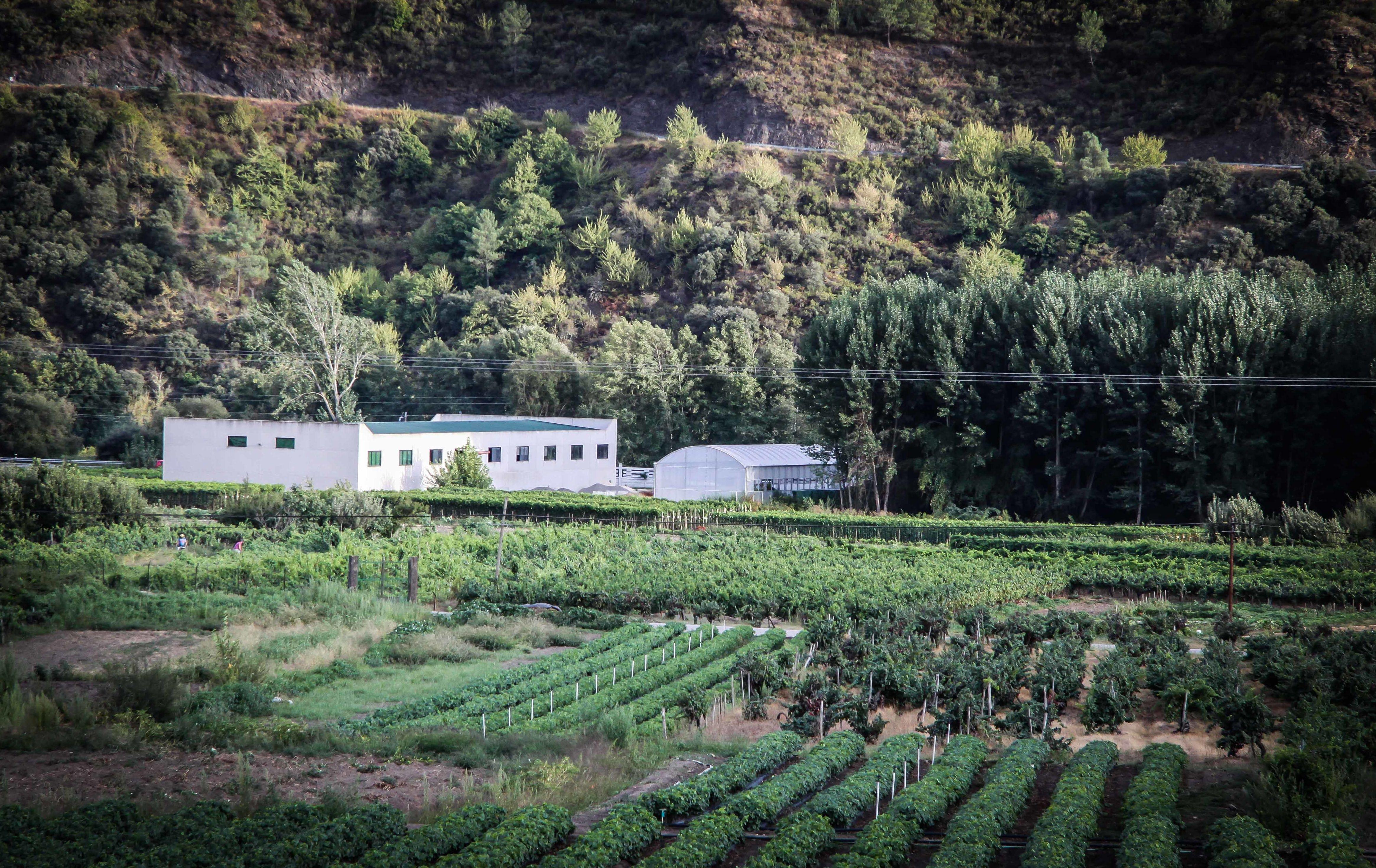 Foto 53 de Viveros agrícolas y forestales en Vilamartín de Valdeorras   Viveros Vedo
