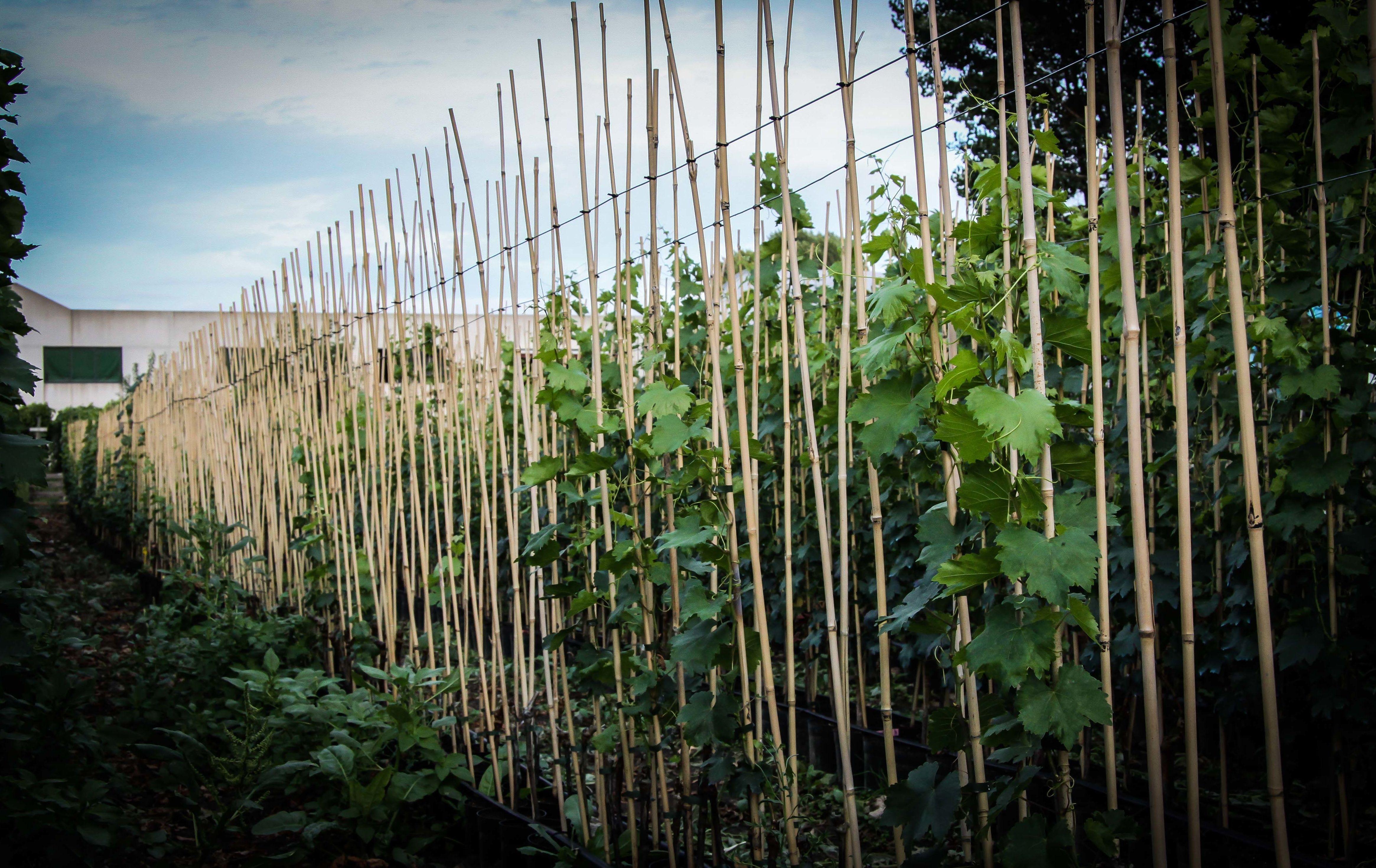 Foto 57 de Viveros agrícolas y forestales en Vilamartín de Valdeorras | Viveros Vedo