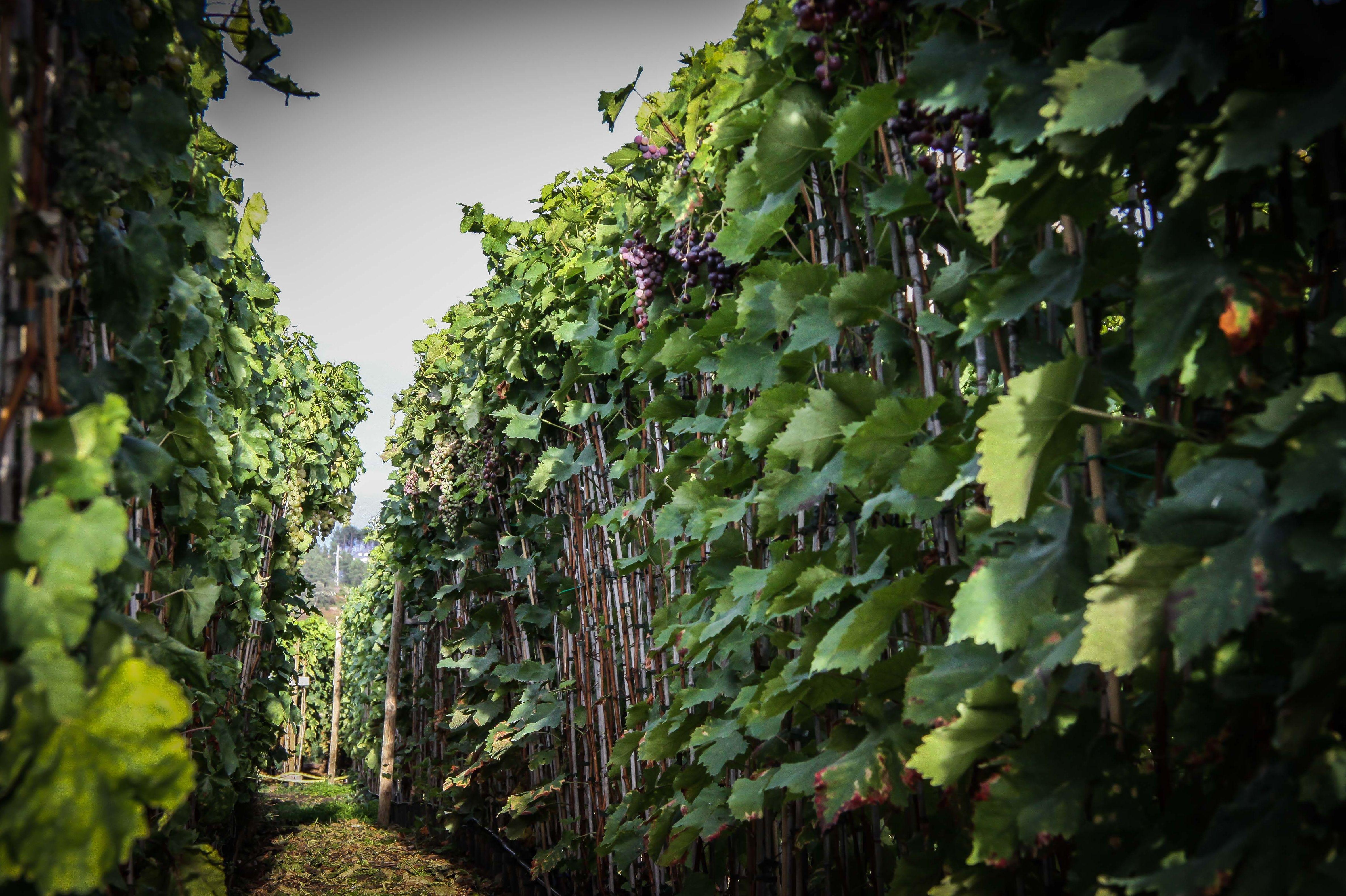 Foto 16 de Viveros agrícolas y forestales en Vilamartín de Valdeorras | Viveros Vedo