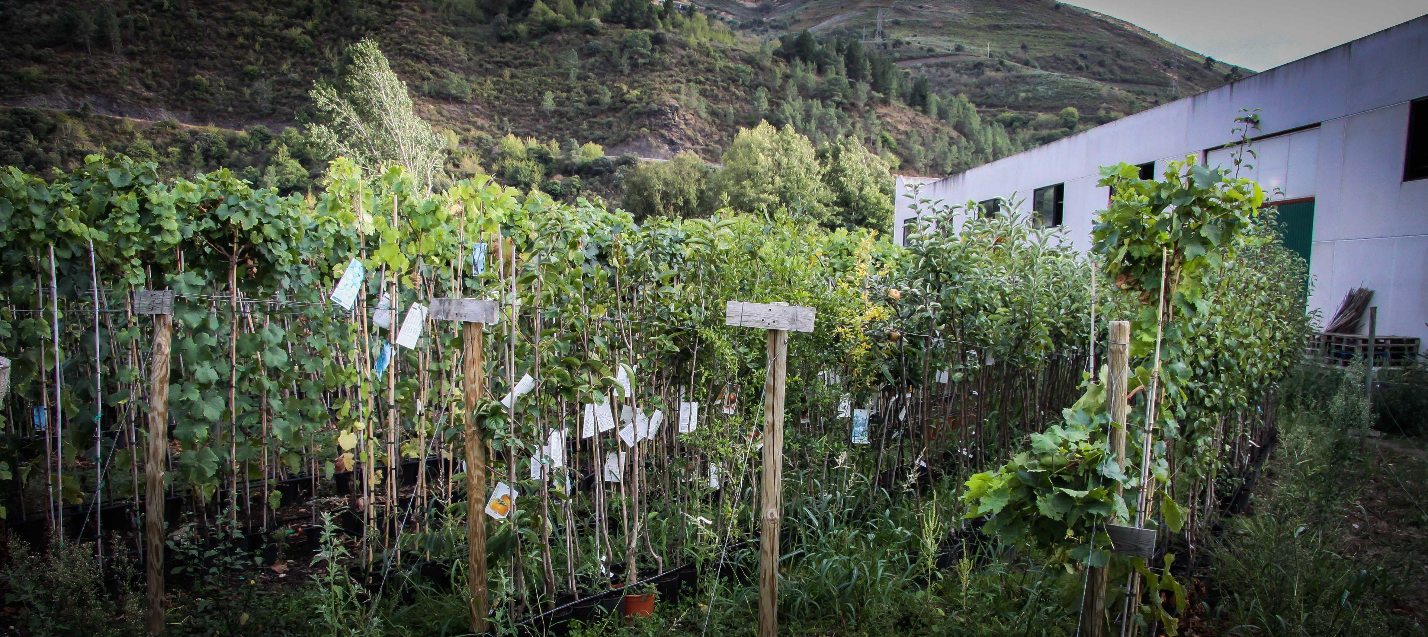 Foto 27 de Viveros agrícolas y forestales en Vilamartín de Valdeorras | Viveros Vedo