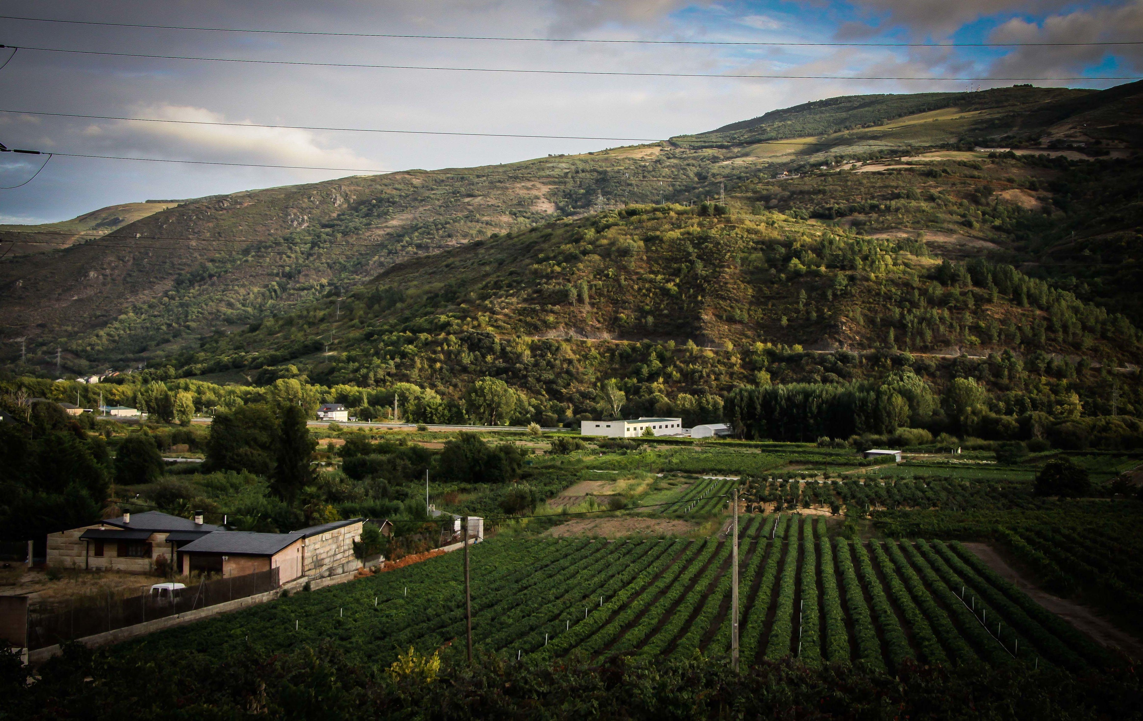 Foto 56 de Viveros agrícolas y forestales en Vilamartín de Valdeorras | Viveros Vedo