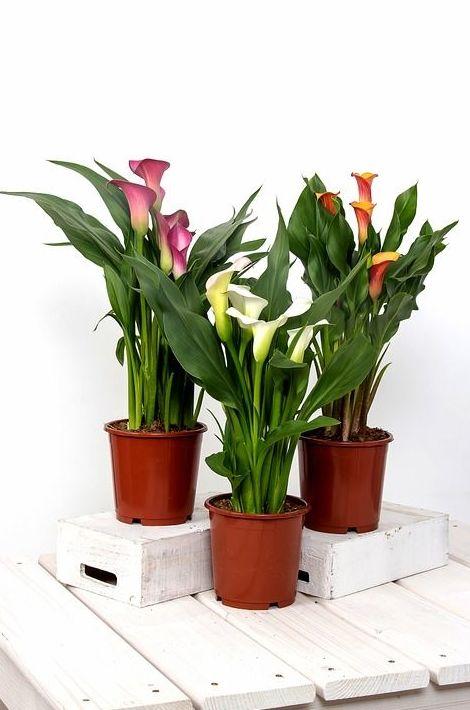 Plantas: Catálogo de Rossán Arte Floral