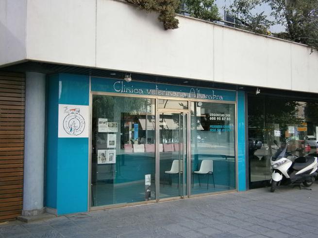 Urgencias veterinarias en Granada