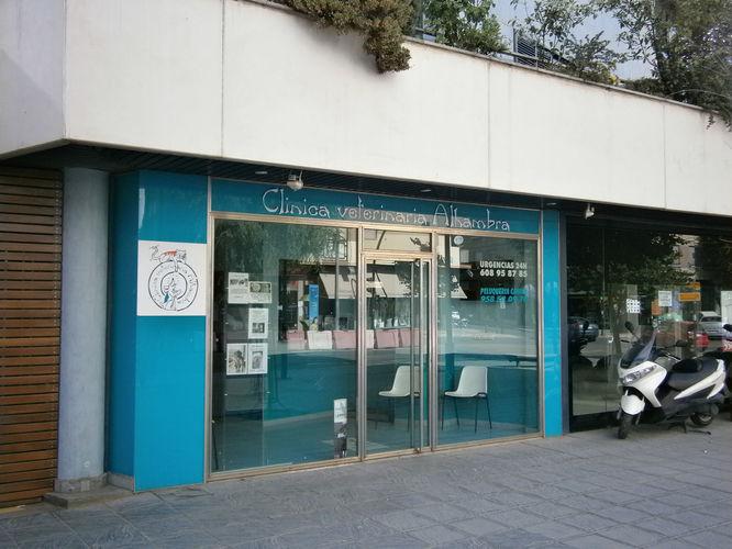 Servicios veterinarios: Casos clínicos en imágenes de Clínica Veterinaria Alhambra