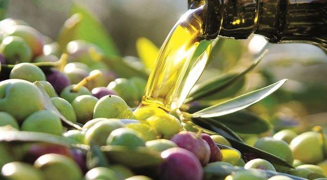 venta de aceite de oliva. Barranco Especialitats
