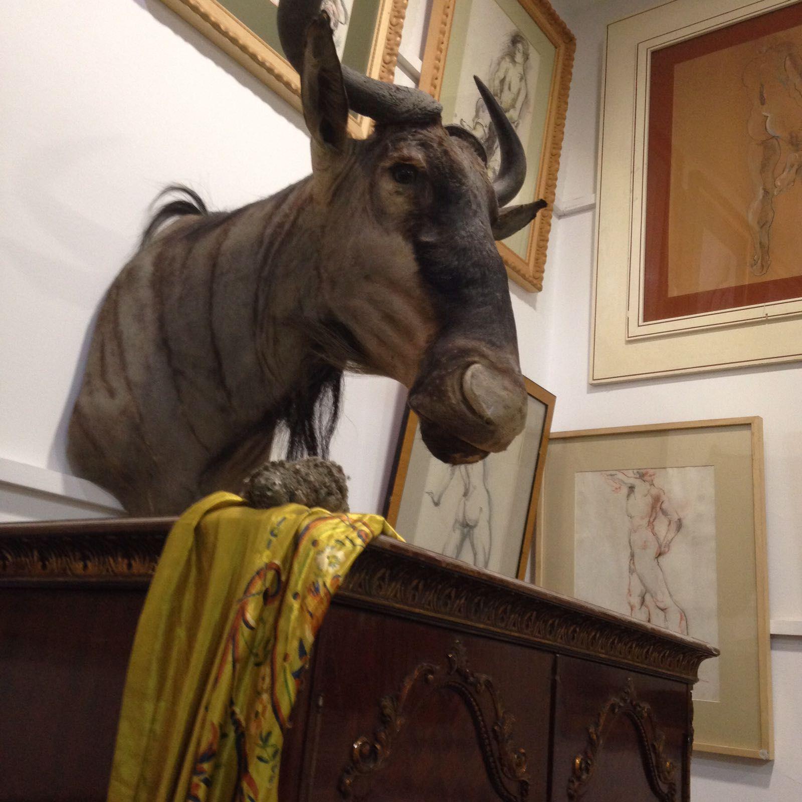 Foto 80 de Galerías de arte y salas de exposiciones en Cartagena | Arte & Antigüedades Federico Robles Perez