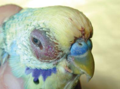 Animales exóticos: Servicios de Hospital Veterinario La Salle Abierto 24 horas