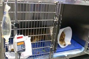UCI: Servicios de Hospital Veterinario La Salle Abierto 24 horas