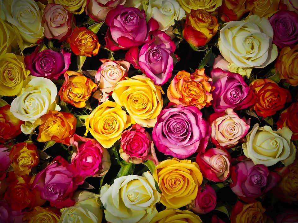 Rosas: Catálogo de Iberflor Decoración y Diseño Floral