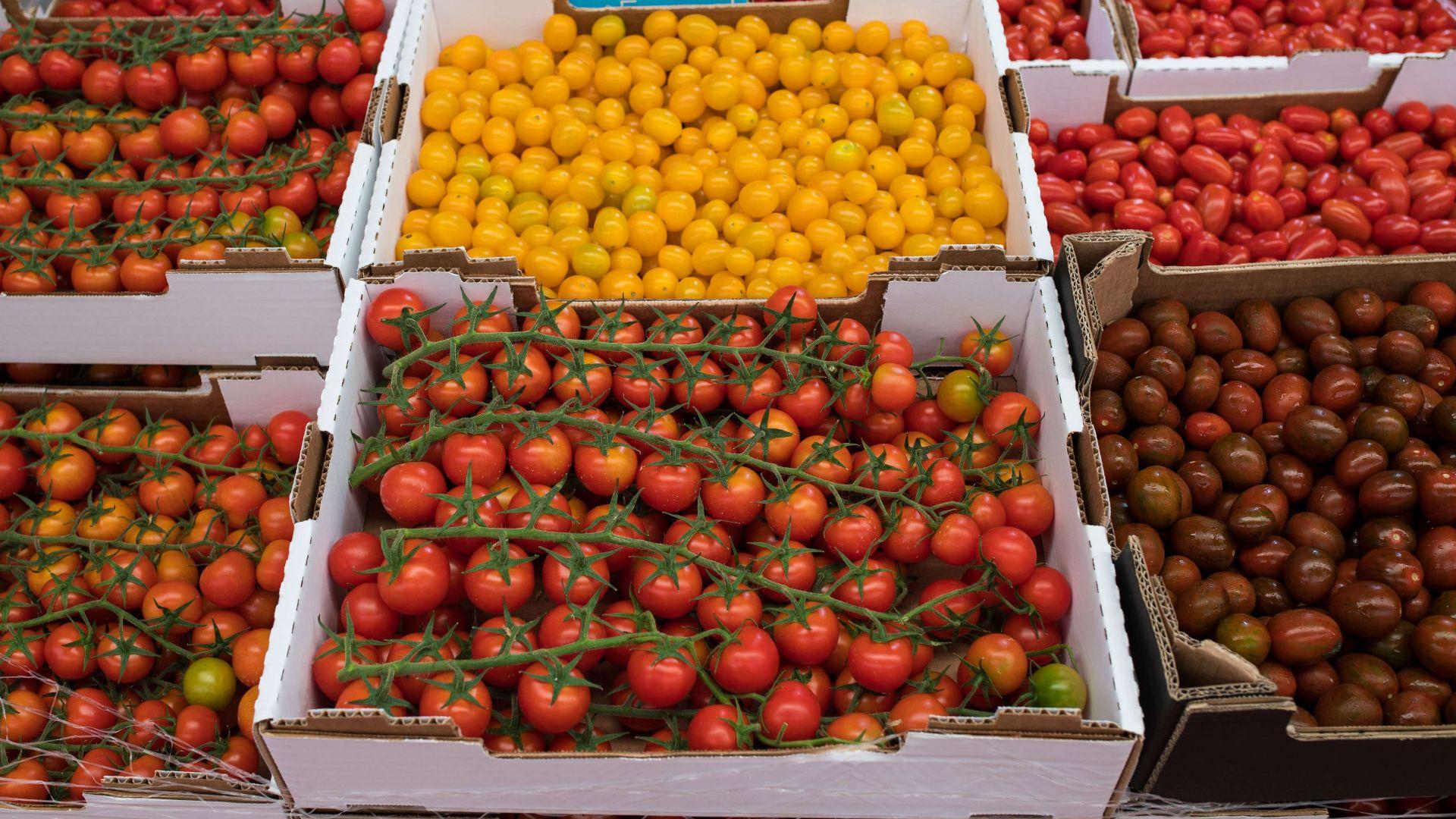 Variedad de tomates para hostelería en Las Palmas de Gran Canaria